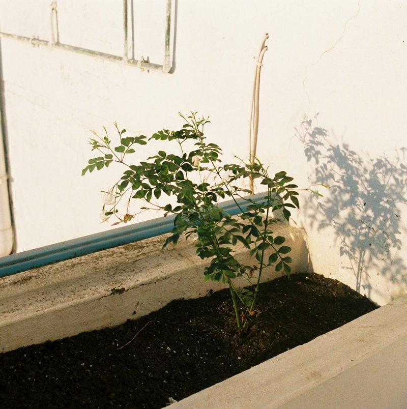 Apartamento Magazine - Rafram Chaddad: isolation